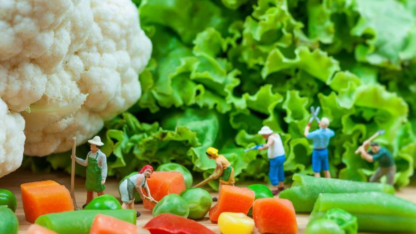 臺中市青年農民輔導計畫